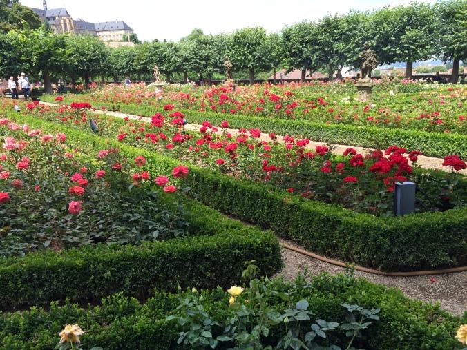 The rose garden. A lovely spot for lunch.